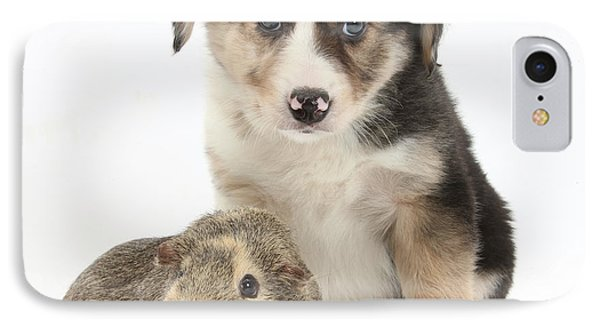 Border Collie Pup And Guinea Pig Phone Case by Mark Taylor