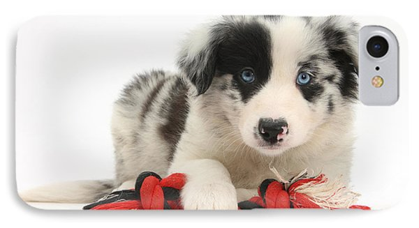 Border Collie Pup Phone Case by Mark Taylor