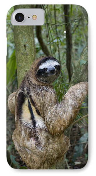 Brown-throated Three-toed Sloth Phone Case by Suzi Eszterhas