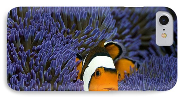 Clown Anemonefish Phone Case by Georgette Douwma