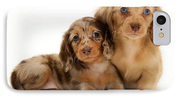 Dachshund Pups Phone Case by Jane Burton