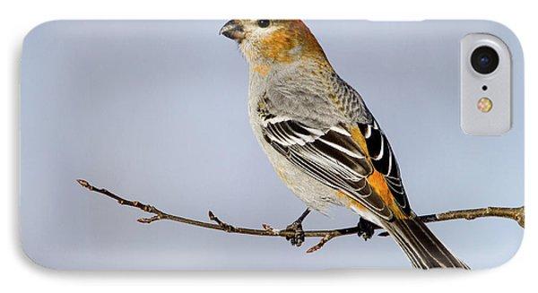 Female Pine Grosbeak IPhone Case