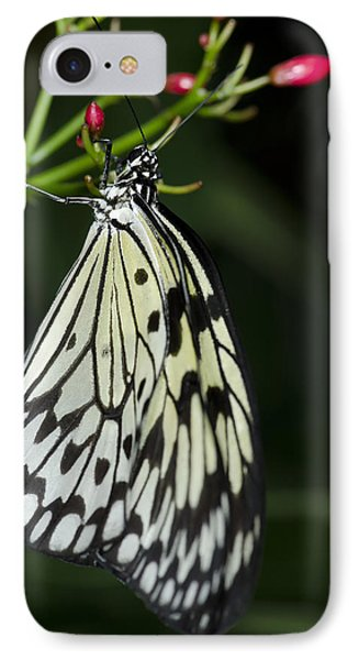 Rice Paper Butterfly IPhone Case by JT Lewis