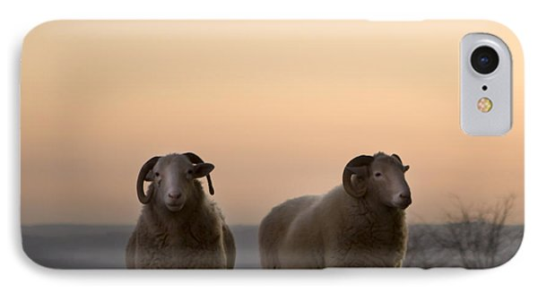 Sheep iPhone 7 Case - The Lamb by Angel Ciesniarska