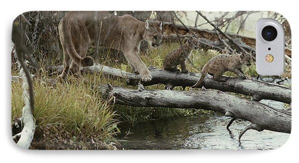 A Mountain Lion, Felis Concolor Phone Case by Jim And Jamie Dutcher