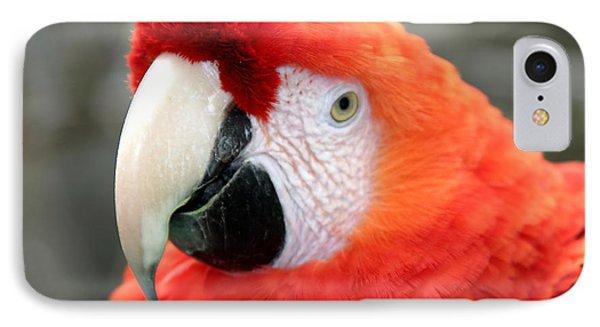 Scarlet Macaw IPhone Case by Henrik Lehnerer