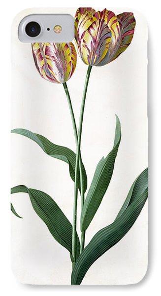 5 Tulip Tulip  Phone Case by Georg Dionysius Ehret