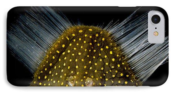 Amazon River Catfish Phone Case by Dante Fenolio