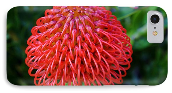 Common Pincushion Protea IPhone Case by Werner Lehmann