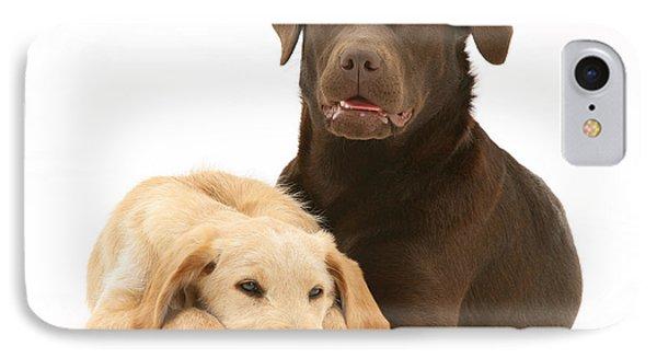 Labradoodle And Labrador Retriever IPhone Case by Jane Burton