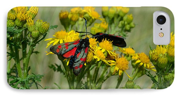 IPhone Case featuring the photograph 6 Spot Burnet by Barbara Walsh