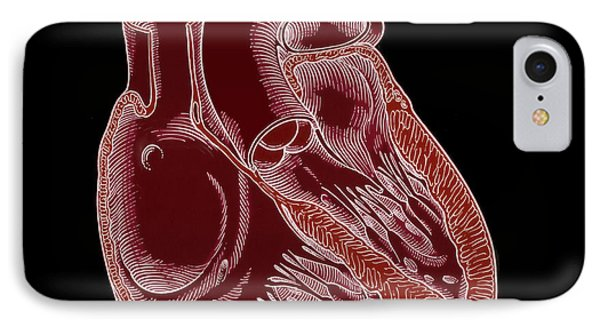 Illustration Of Heart Anatomy Phone Case by Science Source