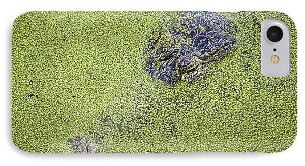 Alligator Untitled Phone Case by Patrick M Lynch