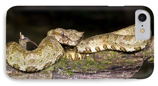 Eyelash Viper Phone Case by Dante Fenolio