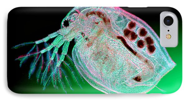 Water Flea Daphnia Magna Phone Case by Ted Kinsman