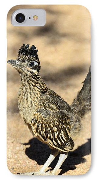 A Baby Roadrunner  IPhone Case by Saija  Lehtonen