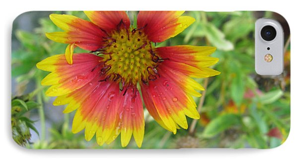A Beautiful Blanket Flower IPhone Case by Ashish Agarwal