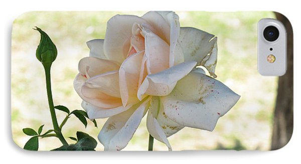 A Beautiful White And Light Pink Rose Along With A Bud IPhone Case by Ashish Agarwal