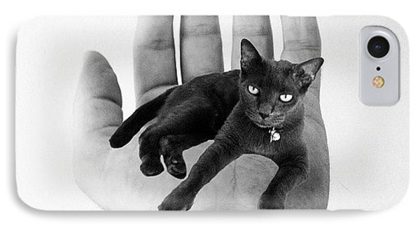 A Cat In The Hand Is Worth IPhone Case