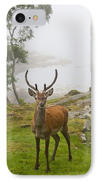 A Deer Stands In A Foggy Meadow By The Phone Case by John Short
