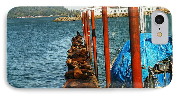 A Dock Of Sea Lions Phone Case by Jeff Swan