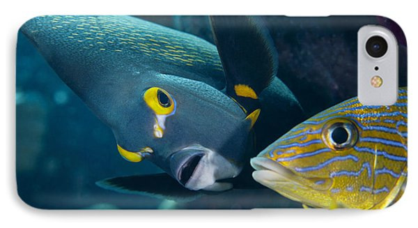 A French Angelfish Swims Up Close Phone Case by Terry Moore