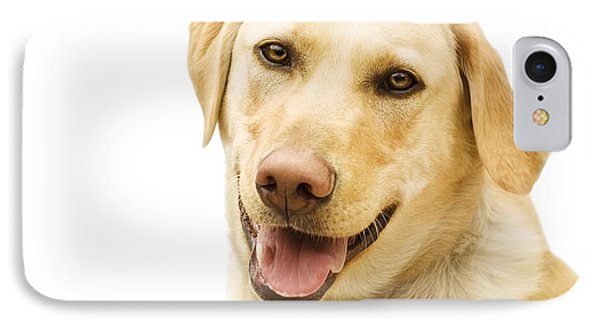 A Golden Labrador Phone Case by Chris Knorr