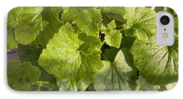 A Green Leafy Vegetable Plant After Watering In Bright Sunrise IPhone Case by Ashish Agarwal