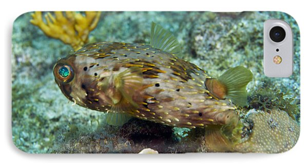 A Long-spined Porcupinefish, Key Largo IPhone Case