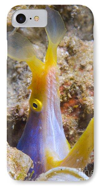 A Male Ribbon Eel Peering Phone Case by Steve Jones