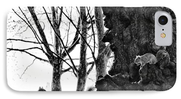 A Meeting Of Squirrels IPhone Case by Bill Cannon