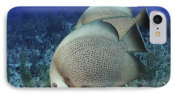 A Pair Of Gray Angelfish On A Caribbean Phone Case by Karen Doody