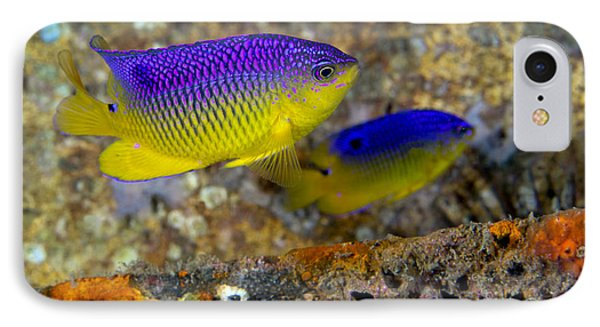 A Pair Of Juvenile Cocoa Damselfish Phone Case by Michael Wood