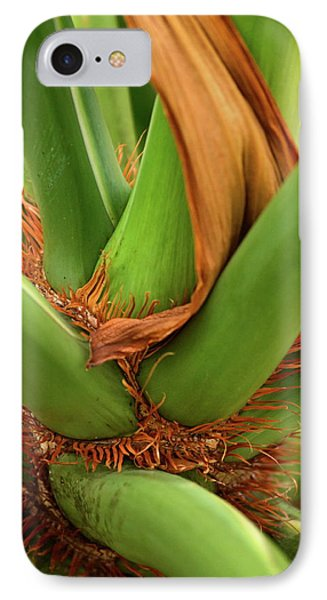 IPhone Case featuring the photograph A Palmetto's Elbows by JD Grimes