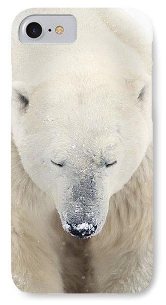A Polar Bear Ursus Maritimus Resting Phone Case by Richard Wear