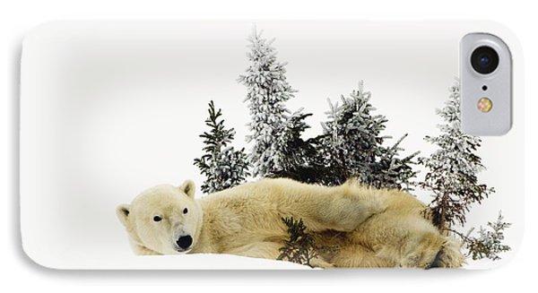 A Polar Bear Ursus Maritimus Phone Case by Richard Wear