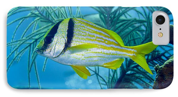 A Porkfish Swims By Sea Plumes Phone Case by Terry Moore