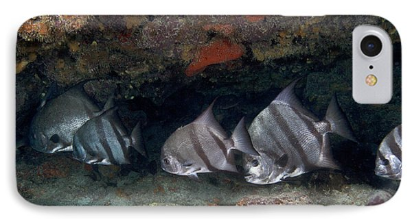 A School Of Atlantic Spadefish IPhone Case
