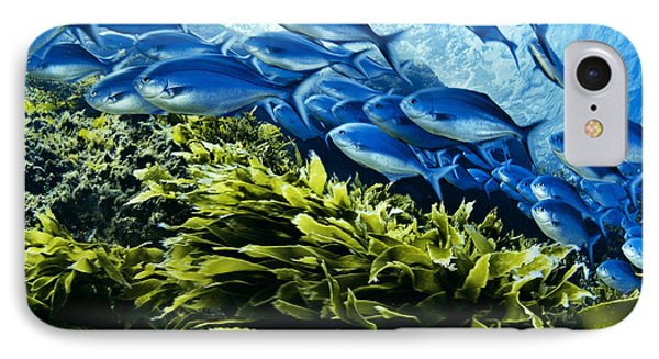 A School Of Blue Maomao Swim Phone Case by Brian J. Skerry