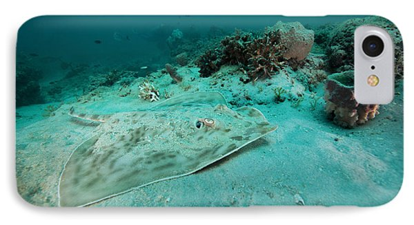 A Southern Stingray On The Sandy Bottom Phone Case by Michael Wood