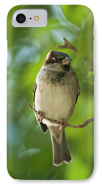 A Sparrow Perched On A Small Branch Phone Case by Ben Welsh