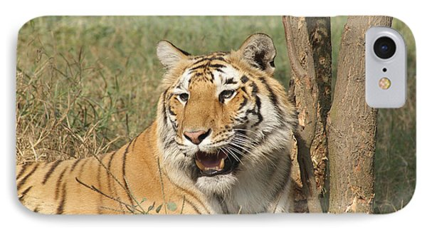 A Tiger Lying Casually But Fully Alert IPhone Case by Ashish Agarwal