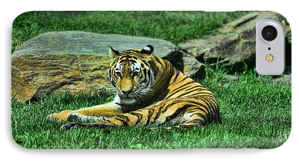 A Tiger's Gaze IPhone Case