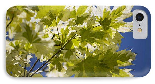 Acer Platanoides 'drummondii' Phone Case by Dr Keith Wheeler