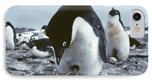 Adelie Penguin With Chick Phone Case by Doug Allan