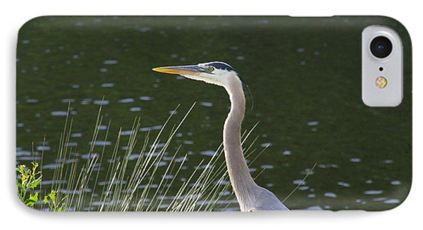 IPhone Case featuring the photograph Adult Great Blue Heron by Brian Wright