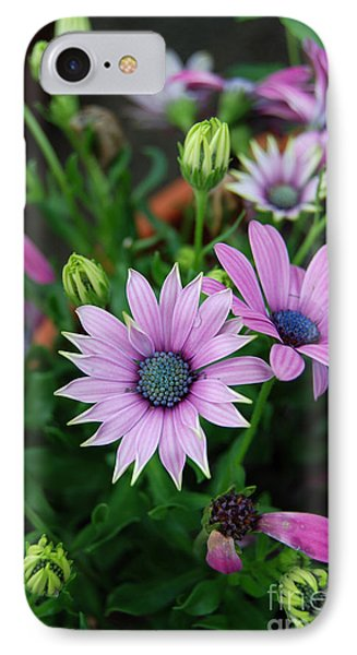 IPhone Case featuring the photograph African Daisy by Eva Kaufman