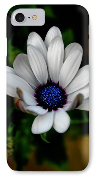 IPhone Case featuring the photograph African Daisy by Lynne Jenkins