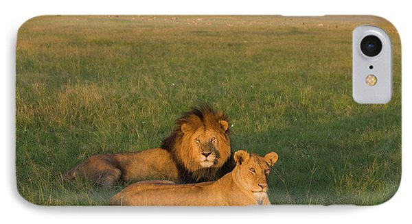 African Lion Panthera Leo Male Phone Case by Suzi Eszterhas