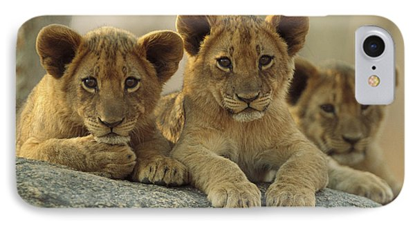 African Lion Three Cubs Resting Phone Case by Tim Fitzharris